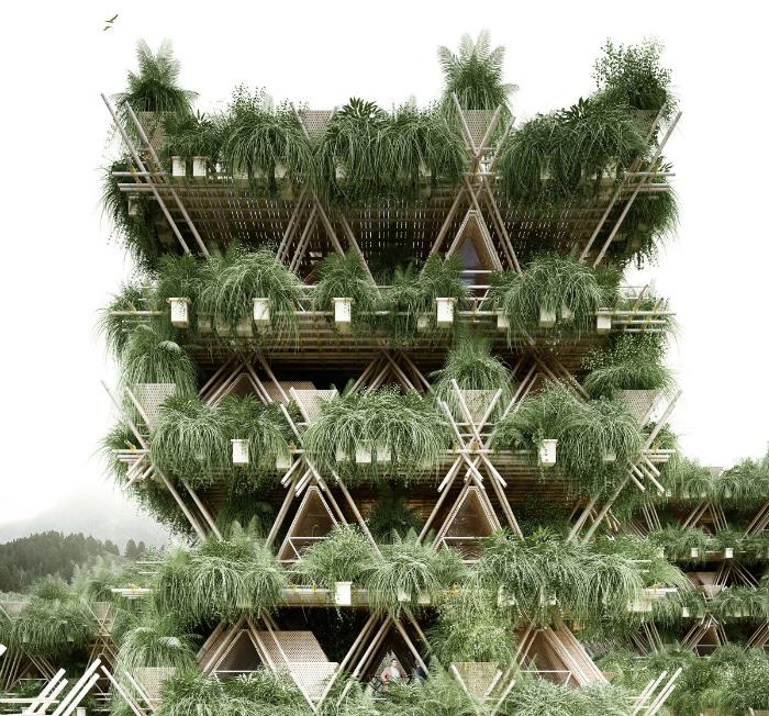 Bamboo4