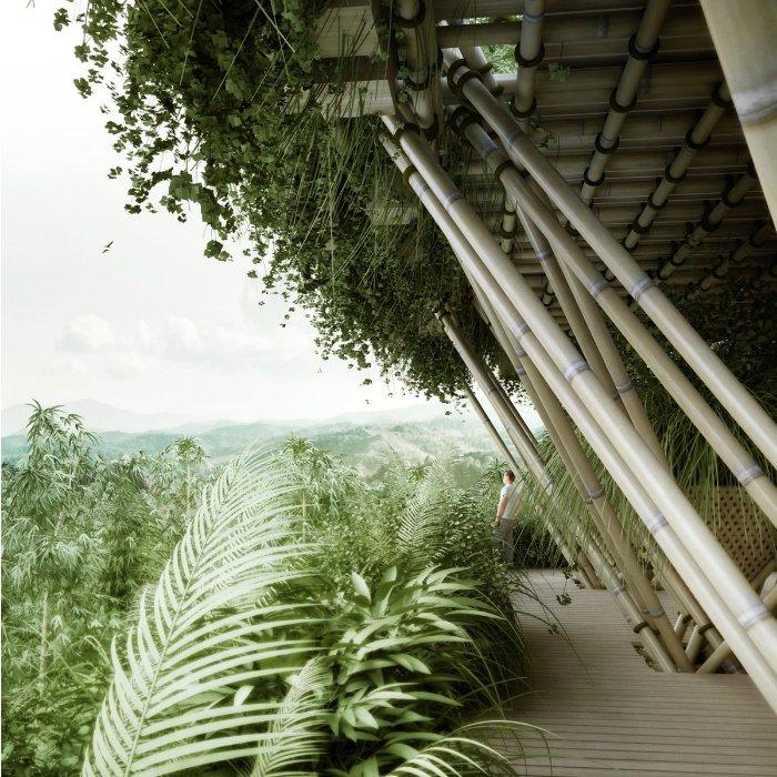Bamboo7