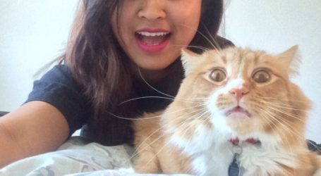 Cats Who Don't Want To Be In Your Selfies