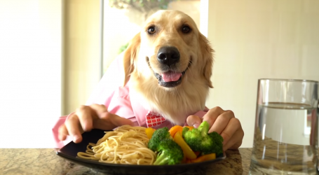 This Video of a Dog as a Chef is a Good Way to Start Your Day