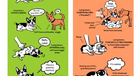Understand Your Dog's Body Language: An Infographic