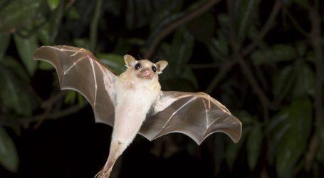 5 Surprising Facts About Bats